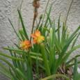 花アロエ 08-04-28
