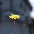 ルビーネックレスの花 09-05-09