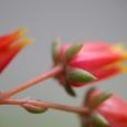 大和実尼の花 10-07-01