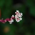 セキ鹿のお花 09-09-20